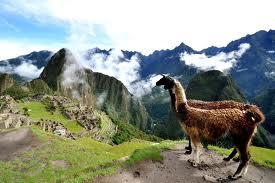 Pepepepepepeeeee-Peru