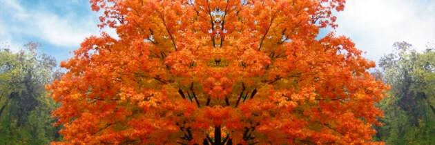 Numero 103 – 1 Ottobre 2013 – Come d'autunno