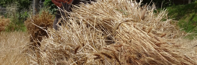 Approccio spensierato alla permacultura