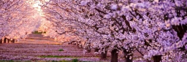 Numero 139 – 1 Aprile 2017 – Marce di primavera